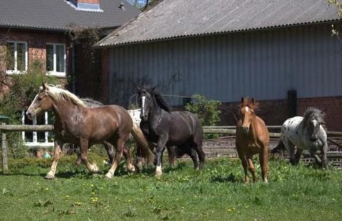 Rabea, Herbert, Rübe, Raja und Fränzi