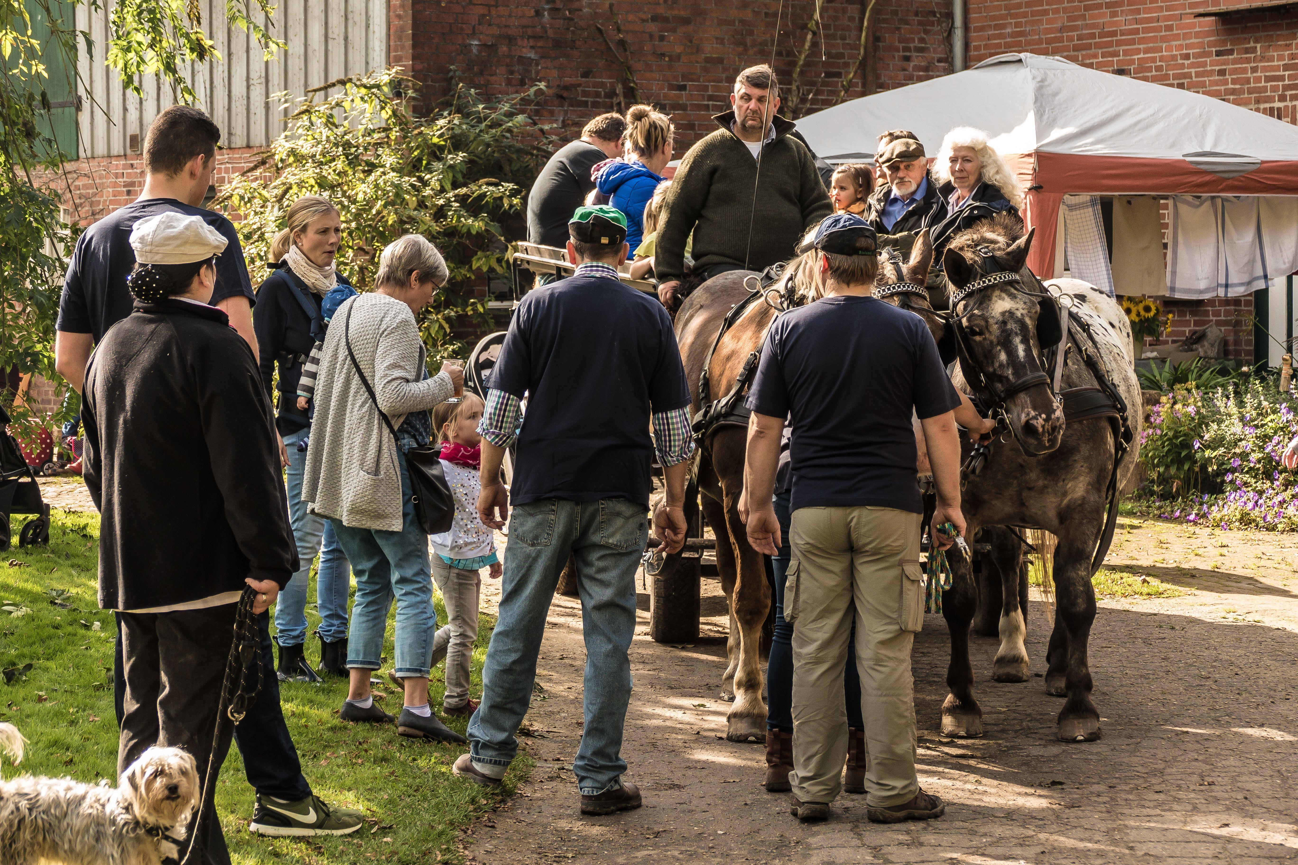 Hoffest 2017 Kutschfahrt mit den Norikren