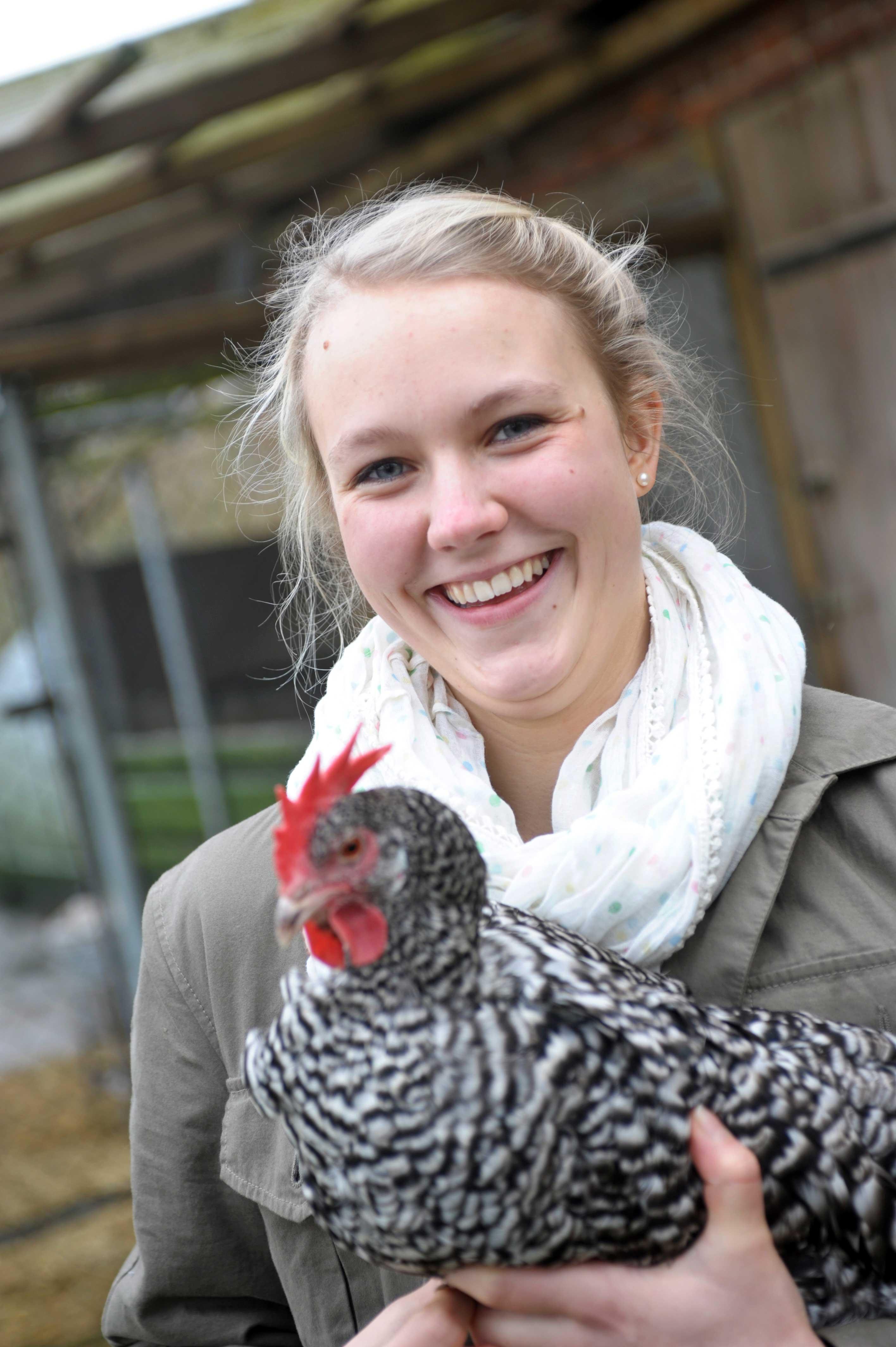 Hühner und Hähne auf dem Hof Hohlegruft