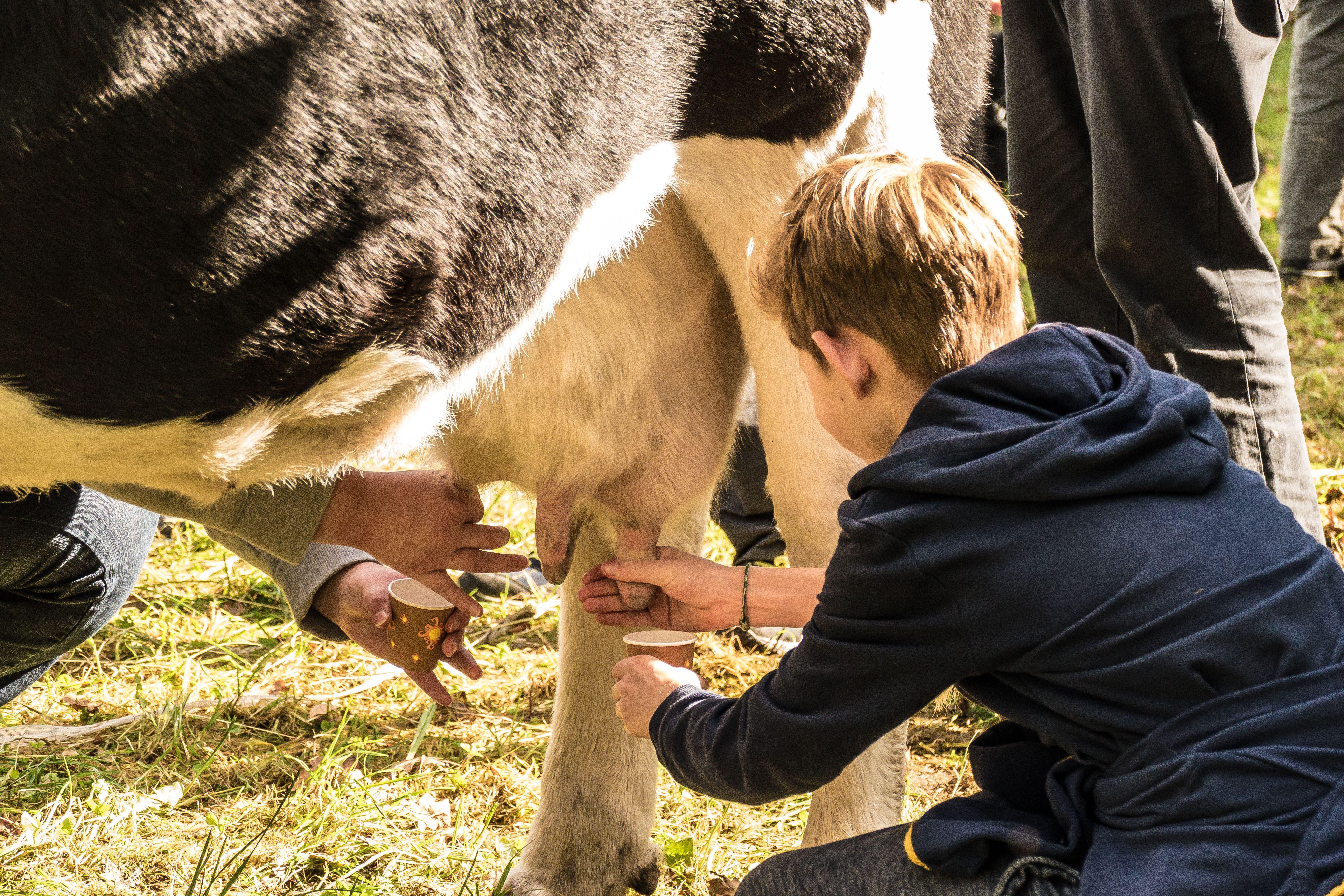 Hoffest 2017 melken mit den Öko Melkburen